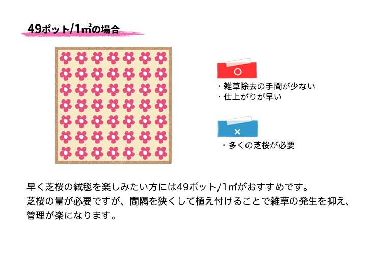 芝桜の植栽数